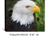 canvas-8x8-01-eagle